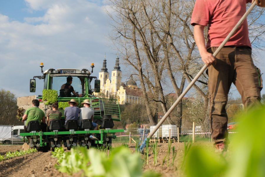 Ernte gesichert: MORGENTAUGÄRTEN setzten 9000 Bio-Jungpflanzen in Graz